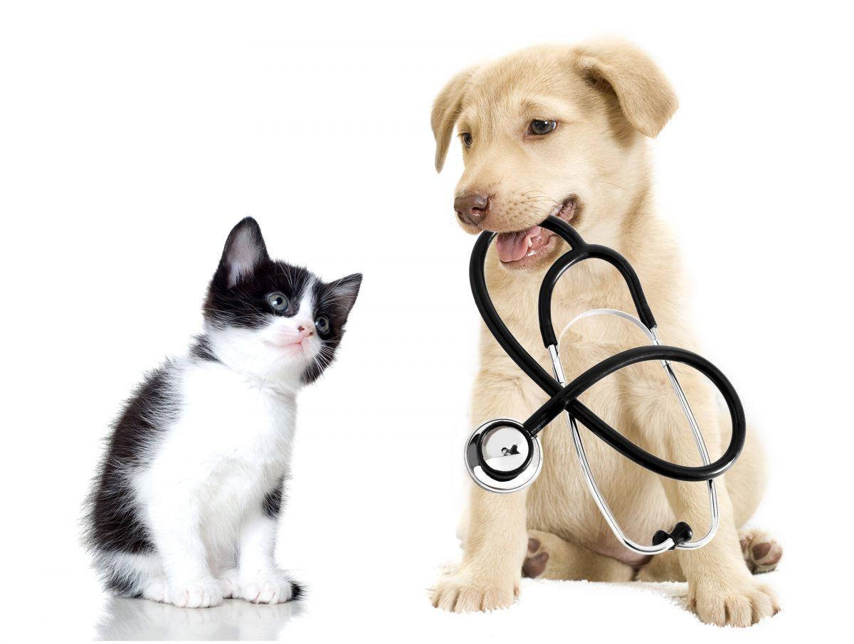 Какие услуги предлагает обычная ветеринарная клиника?